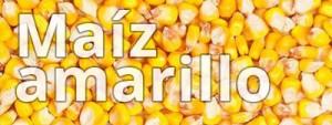 maizamarillo
